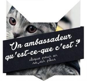 min-ambassadeur