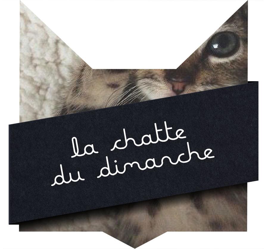 chatte-dimanche-14-02