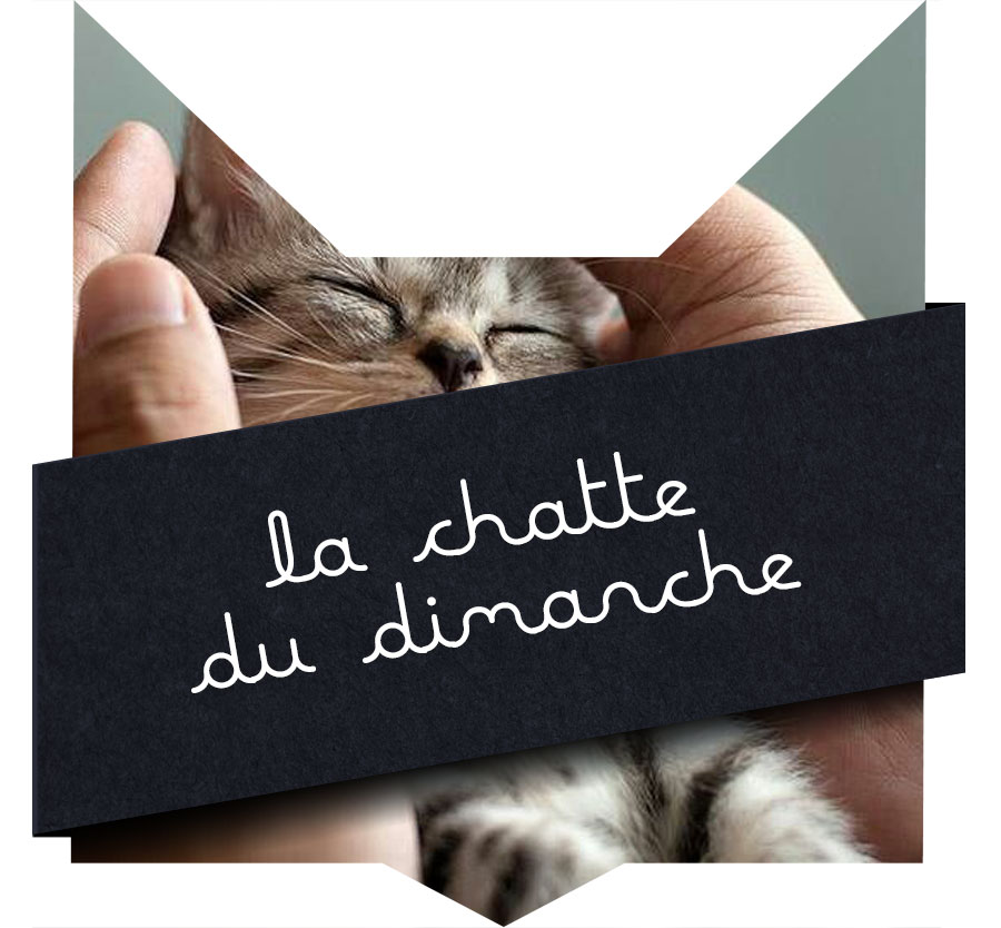 tete-chat-chatte-20