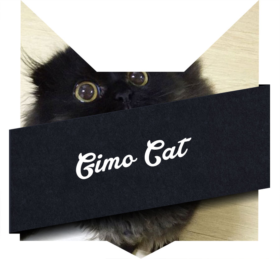 tete-chat-gimo