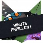 tete-chat-minute-papillon