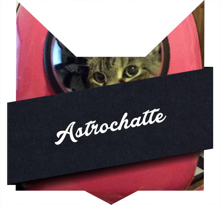 tete-chat-astrochatte