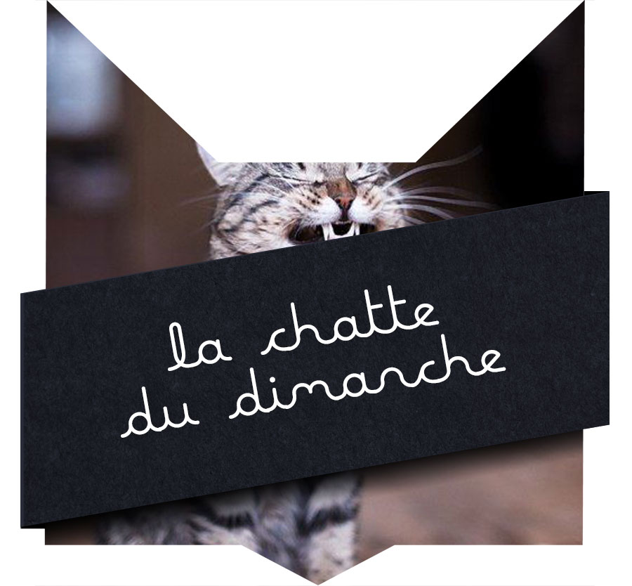 tete-chat-chatte-28
