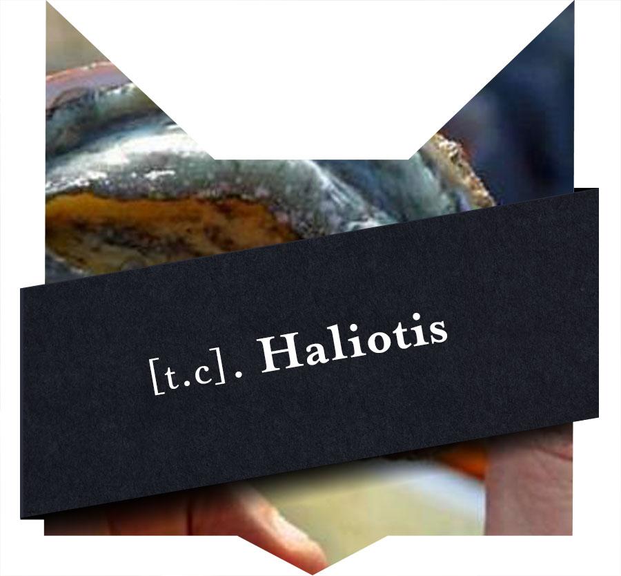 tete-chat-haliotis