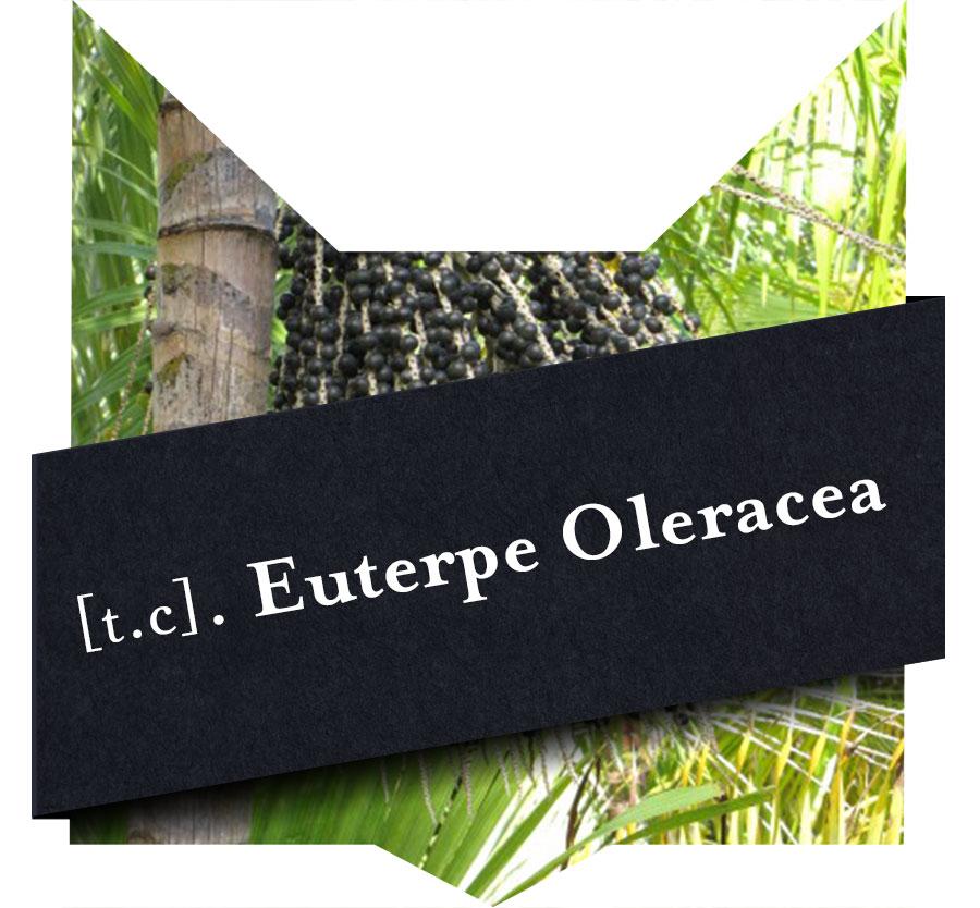 tete-chat-Euterpe-oleracea