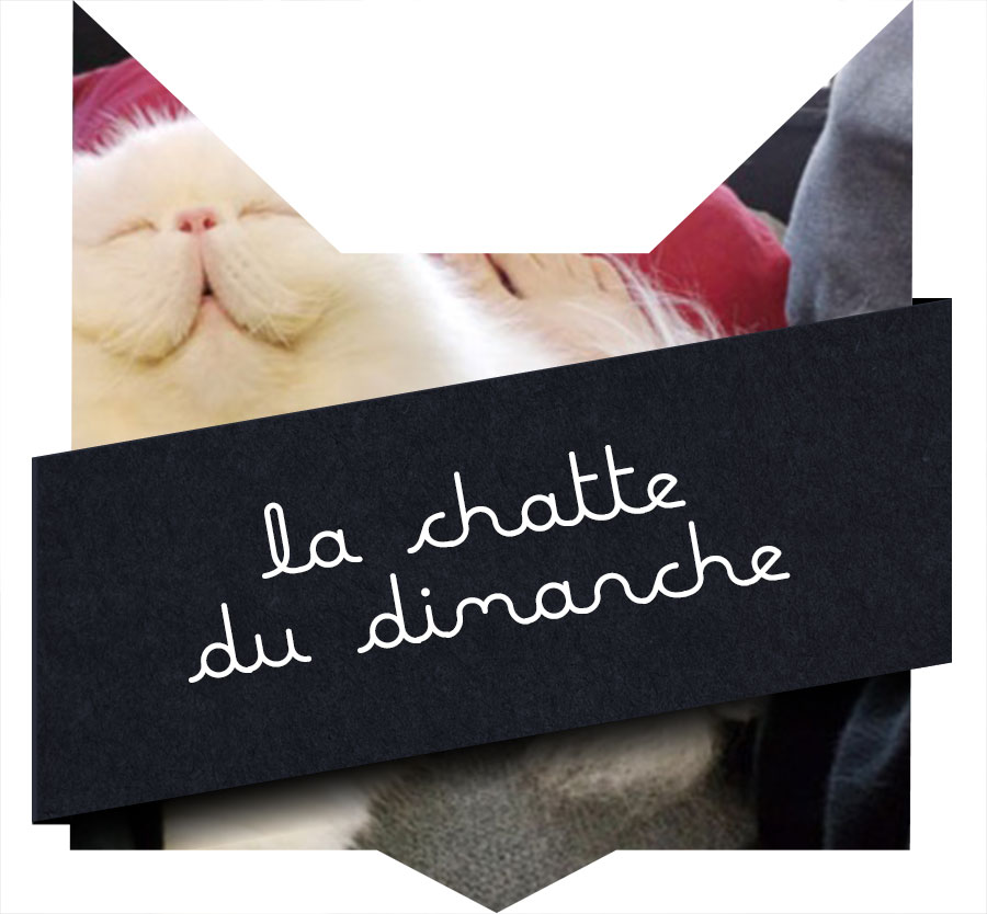 tete-chat-chatte15