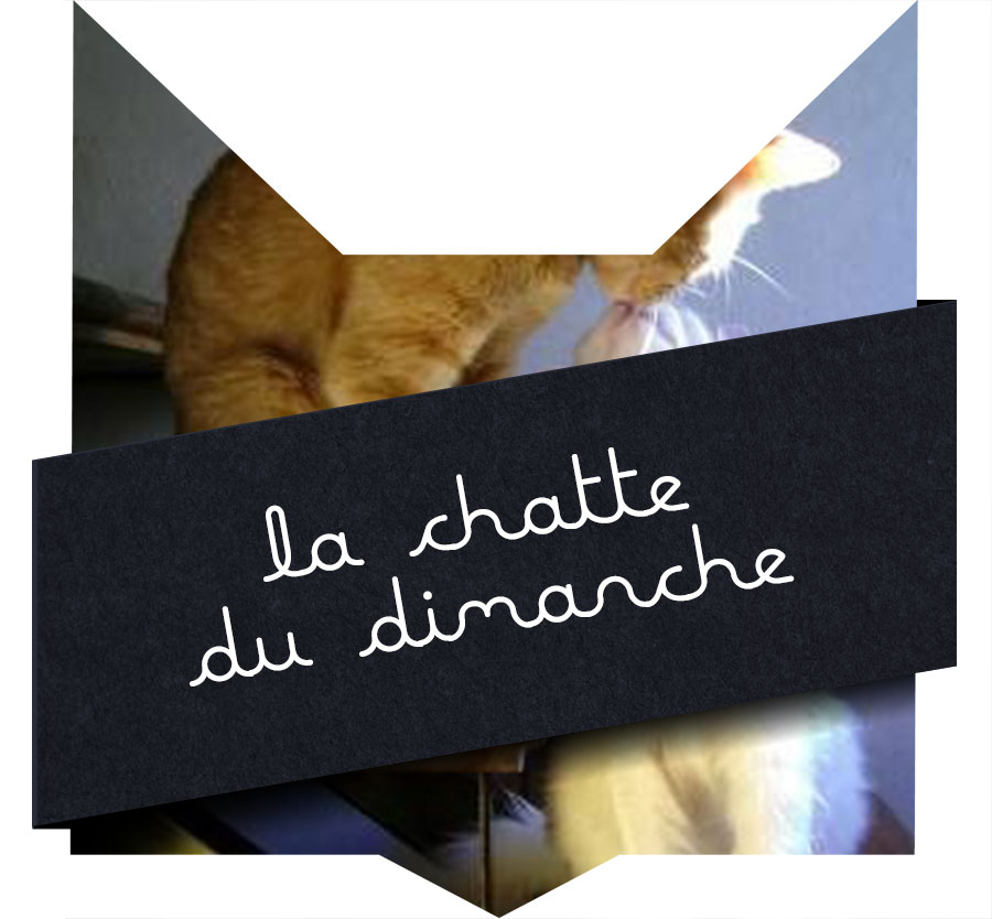 tete-chat-chatte8