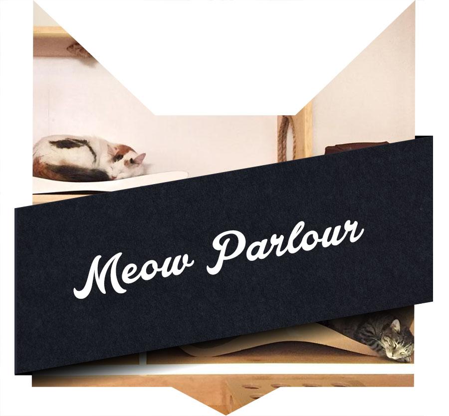 tete-chat-meow