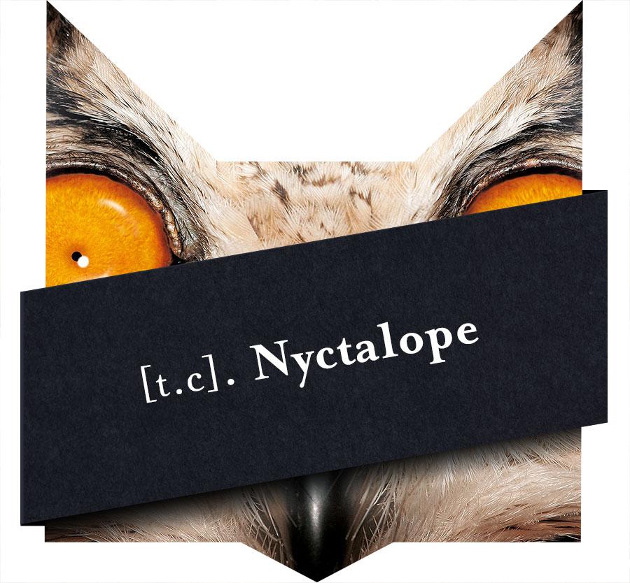 tete-chat-nyctalope