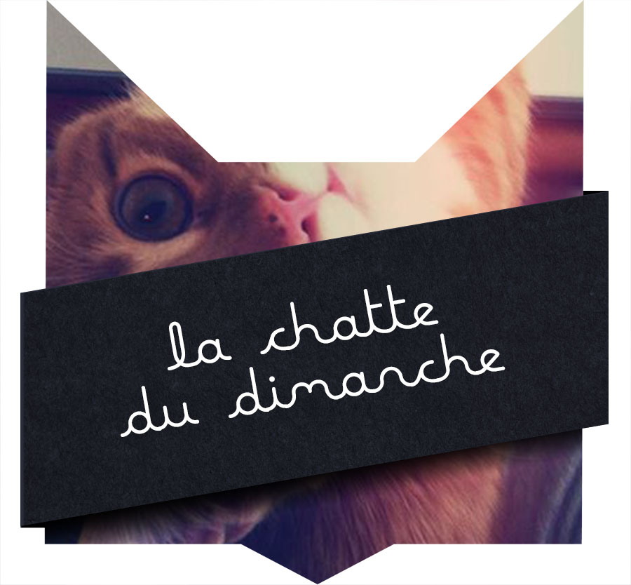 tete-chat-chatte