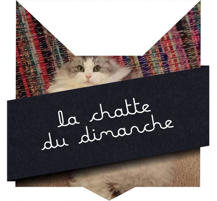tete-chat-chattefluff