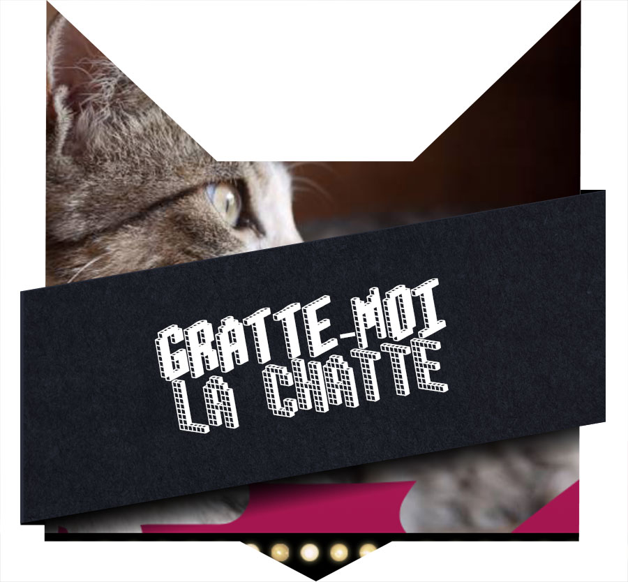 tete-chat-gratte