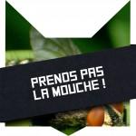 tete-chat-mouche