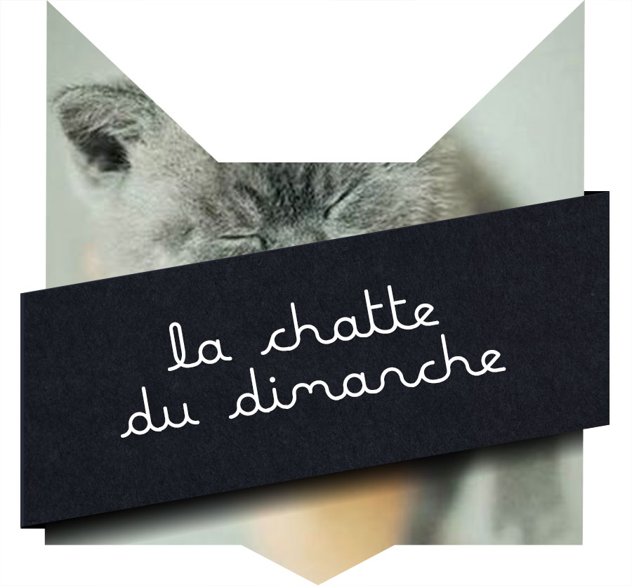 tete-chat-chattedimancheronron