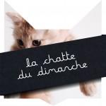 tete-chat-chatte-dim-14