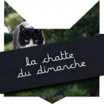 tete-chat-chattoune
