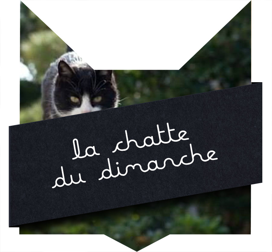 tete-chat-chattoune