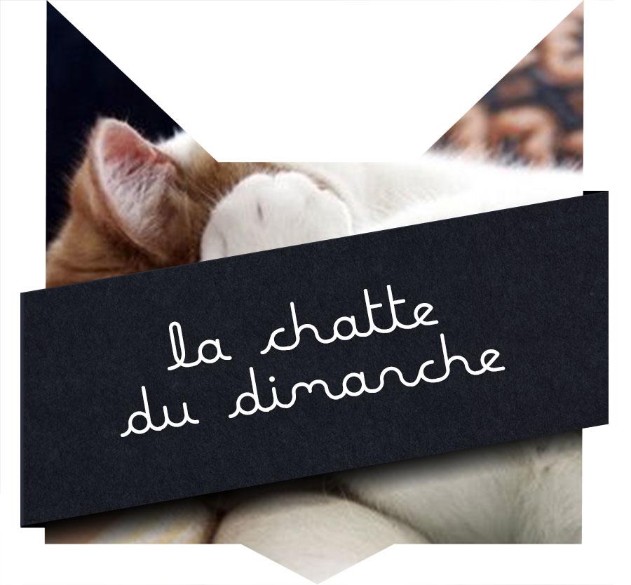tc-chatte