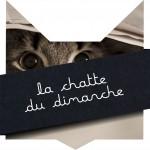 tete-chat-chatte-dimanche-25