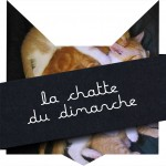 tete-chat-chattounes