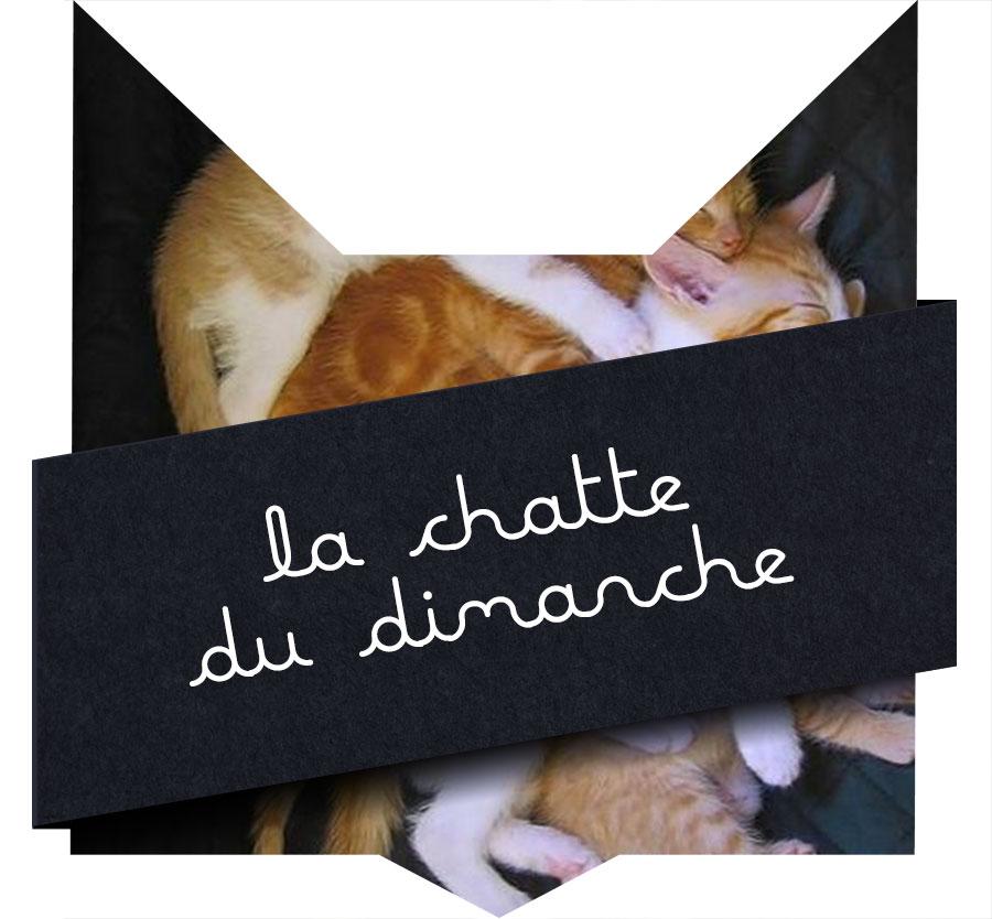 tete-chat-chattounes