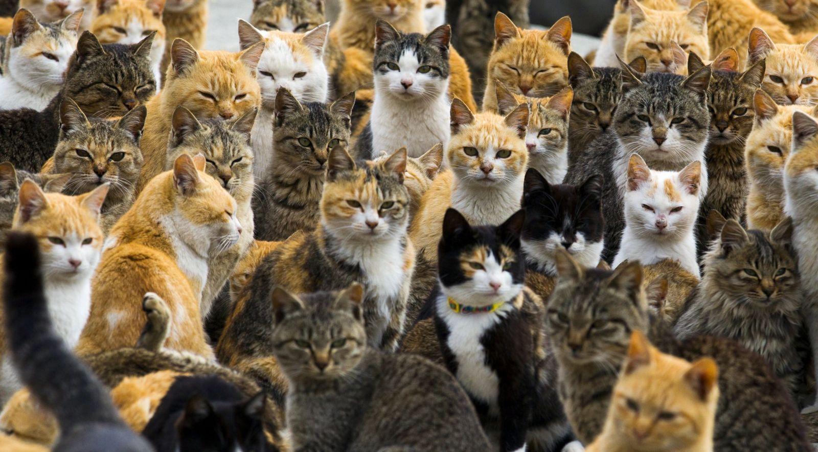 aoshima-cats