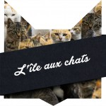 tete-chat-cats-island