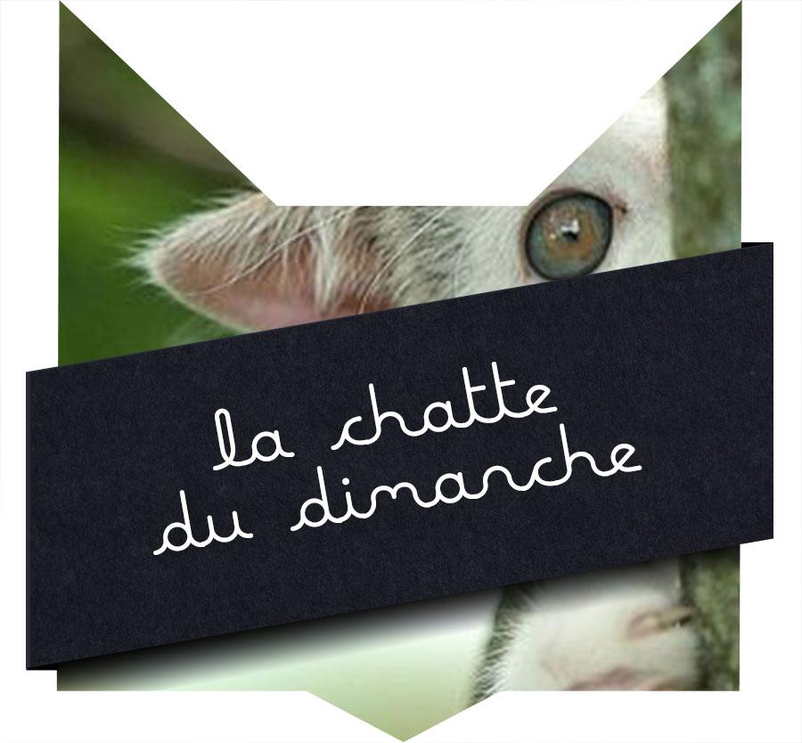 tete-chat-chatte-dimanche-20