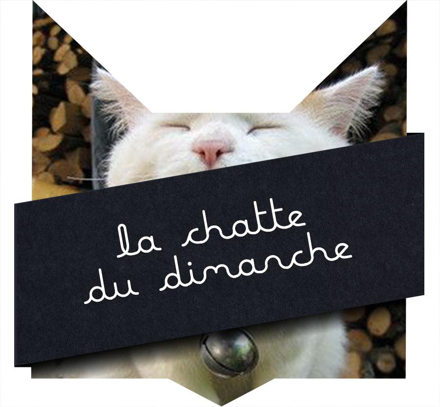 tete-chat-chatte-dimanche