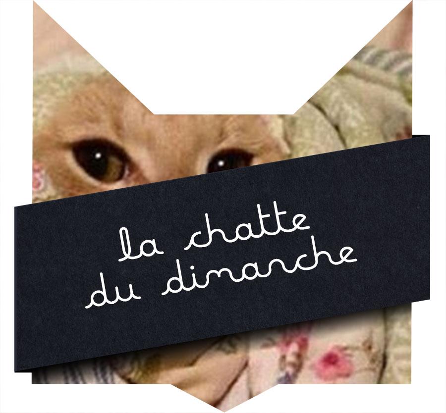 tete-chat-chatte-miaou