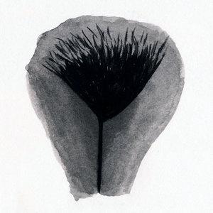 vulvagallerybrown37