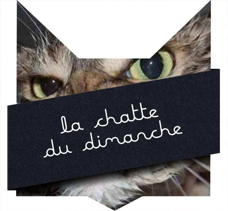 tete-chat-chatte-dimanche-dec
